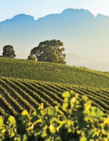 Stellenbosch Wine Region